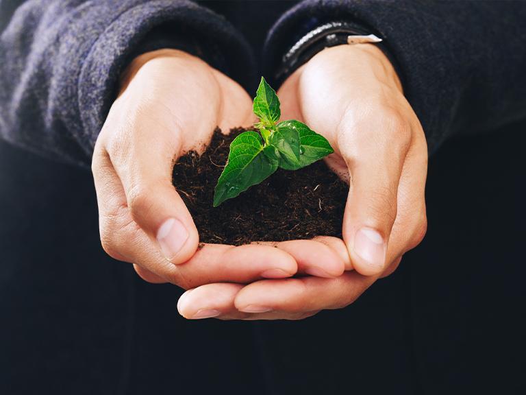 dłonie trzymające roślinę wziemi